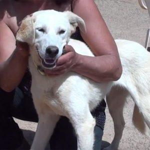 beauty adopt a dog from Greece