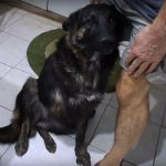 daimie rehome a dog from Greece