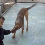 djego adopt a dog from rescue centre