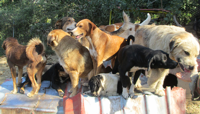 About the charity - Friends of the Strays of Greece