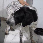 jackie adopt a homeless dog