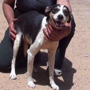 jajaba adopt a dog from Greece