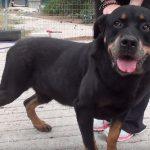 jason adopt a dog