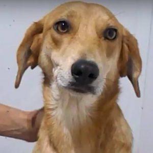 julie rescue a dog