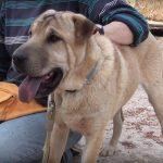 marlon rehome a Greek dog