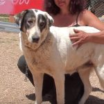 megali adopt a dog from Greece