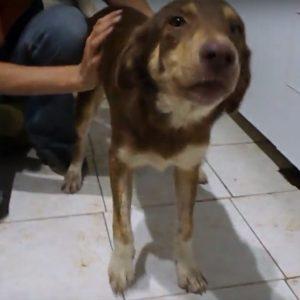odette adopt a homeless dog
