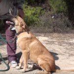 poseidon adopt a dog