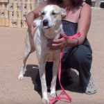 rebecca adopt a dog from Greece