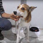 tony dog available for adoption
