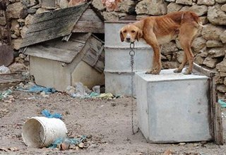 Ways to help stray dogs